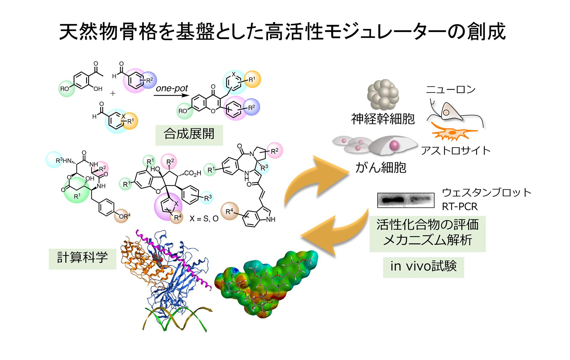 有機合成による天然物様化合物の創成